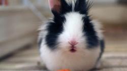 1Giornata-del-coniglio-2013-come-partecipare