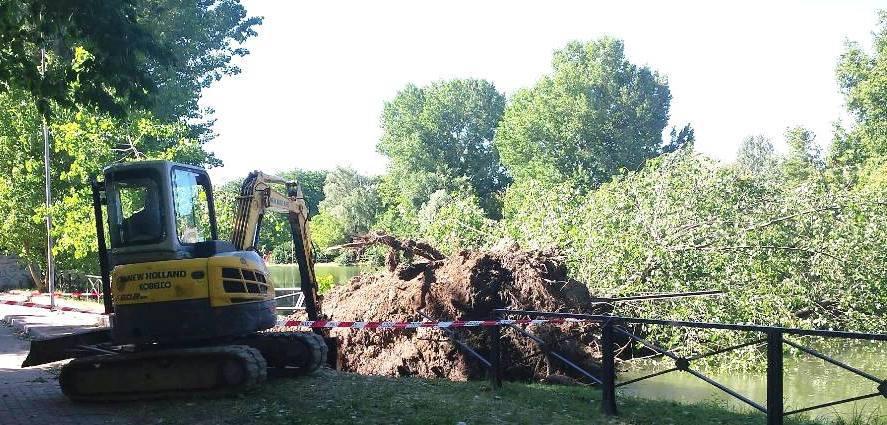 #Buccinasco: alberi caduti e territorio… ci stiamo lavorando!